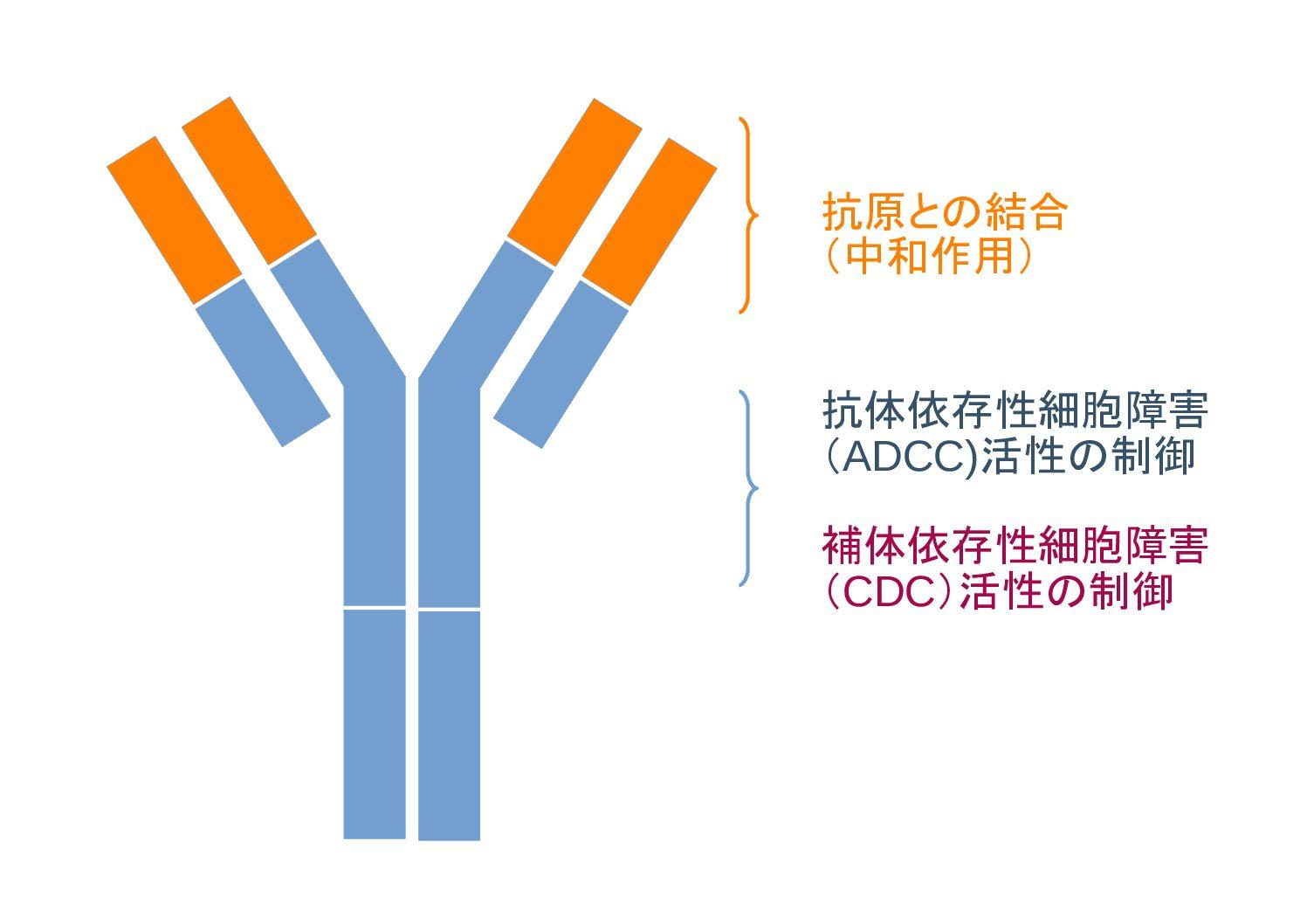「抗体の利用と抗体医薬品 【がん治療における抗体医薬品】 《Part.3》  Vol.49」記事内の画像