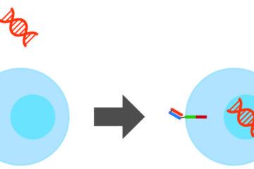 「話題のCAR-T細胞療法について Vol.58」記事内の画像