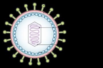 「がんを引き起こすウイルス(4) Vol.72」記事内の画像