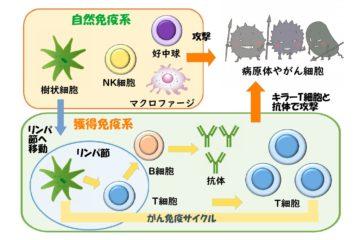 「がんを引き起こすウイルス(6) Vol.79」記事内の画像