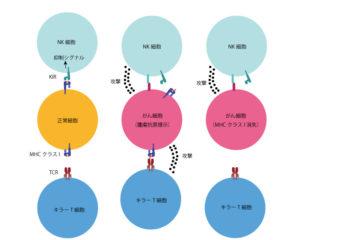 「NK細胞療法 Vol.85」記事内の画像
